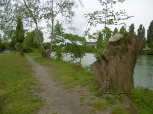 2015,Beaumont,ripisylve,campagne 8,têtard,après,01-06-2015_22